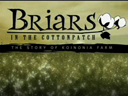 Briars in the Cottonpatch